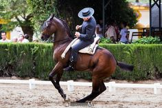 Moments before 'media vuelta' in canter. Pretty Horses, Horse Love, Dark Horse, Beautiful Horses, Spain Culture, Andalusian Horse, Horse Pictures, Horse Art, Big Dogs