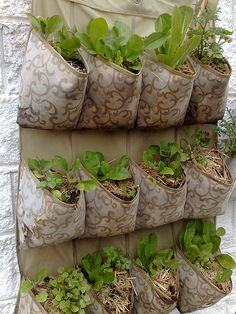 Great idea for an herb garden... And easy to water, just punch a couple of small holes in the bottom of each pouch. I'm hanging mine on the fence in my side yard outside the kitchen side door!