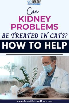 Can Kidney Problems Be Treated In Cats? If Kidney Disease Is Found, Treatments Can Range From Surgery To Remove Blockages To IV Fluids To A Special Diet And Medications. Talk To Your Vet About...Read More Here! #CatHealth #KidneyProblemsInCats #KidneyDisease
