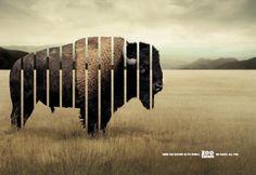 Zoo Safari: Bizon, Zoo Safari, DDB Brasil, Zoo Safari, Print, Outdoor, Ads