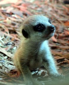 Meerkat pup at Blackpool Zoo  Photo shared on our Facebook page by Kate Martin