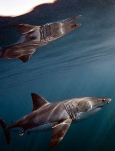 Shark Mirror by Harry Stone