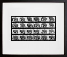 """Animal Locomotion #733 (Elephant)"" by Eadweard Muybridge. Chronophotography FTW! $60.00"