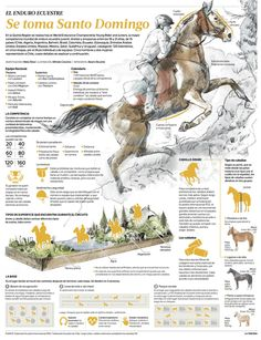 Equestrian endurance takes over Santo Domingo