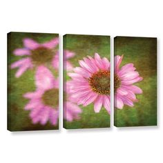 Flowers In Focus 3 by David Kyle 3 Piece Gallery-Wrapped Canvas Set