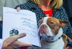 On Wednesday, a long-awaited victory was won for the animals of Pennsylvania as Gov. Tom Wolf signed Senate Bill 298. Known as Libre's Law, the legislation allows district attorneys to bring felony charges against animal abusers. Libre, the pup who spurred on the creation of the new law, approved it with a paw print signature at the …