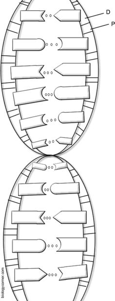 DNA Coloring Page | DNA and Worksheets