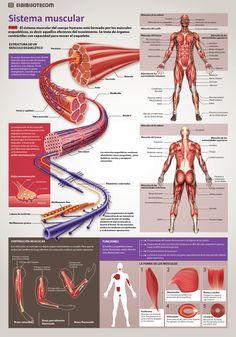 Para ver la infografía en tamaño completo haga Click Derecho > Ver Imagen