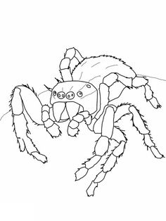 Free Spider Coloring Pages. Spiders are a type of animal with booklets (arthropods) with two body segments, four pairs of legs, wingless, and no chewing mouth. All types of spide. Hulk Coloring Pages, Spider Coloring Page, Spiderman Coloring, Halloween Coloring Pages, Animal Coloring Pages, Coloring Pages To Print, Free Coloring Pages, Printable Coloring Pages, Christmas Spider