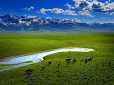 Lush green pastures, Mongolia - click the pic to see more Spectacular Places Mongolia, Brunei, Laos, Oh The Places You'll Go, Places To Visit, Beautiful World, Beautiful Places, Beautiful Sky, Sri Lanka