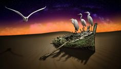 DESERT - Egrets as fine art