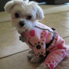 Artfire Dog Pajamas for Small Dogs Pink Paw Fleece for Maltese Yorkies from Littledogfashion