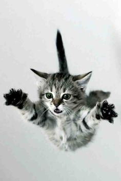 Low flying kitty coming in for landing.