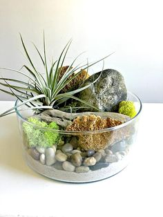 Brand new collection>>>>> Terrariums are a great low maintenance way to garden i. Brand new collec Cool Plants, Air Plants, Indoor Plants, Air Plant Terrarium, Garden Terrarium, Terrarium Ideas, Large Glass Vase, Air Plant Display, Herbs Indoors