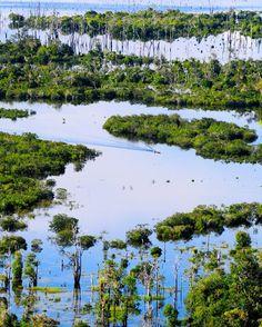 Sentarum Lake, Indonesia