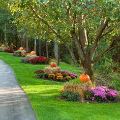 fall ideas - Oh how pretty!!@ My drive I wish ! maybe?