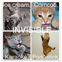 Invisible cat collection two