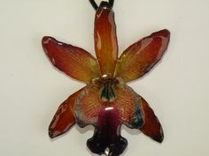 www.orchidtreasures.org