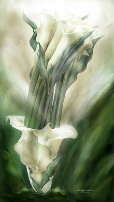 White Callas In Calla Vase