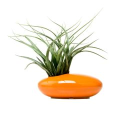 The Mod Saucer Planter feels at home on your dining table, in your living room, or on the entryway console table. Perfect for those lacking confidence in their green thumb, this striking planter is per...  Find the Mod Saucer Planter in Orange, as seen in the Mid-Century Classics Collection at http://dotandbo.com/collections/mid-century-classics?utm_source=pinterest&utm_medium=organic&db_sku=CHV0031