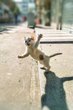 Cute Cats Ginger Really Cute Cats And Kittens White Funny Animal Pictures, Cute Funny Animals, Cute Baby Animals, Funny Cats, Fun Funny, Cute Cats And Kittens, Baby Cats, Kittens Cutest, Beautiful Cats