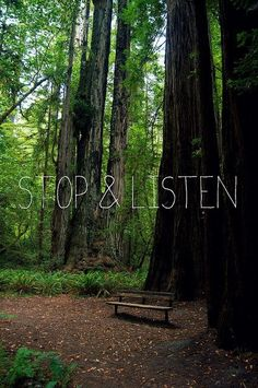 Just stop and listen.