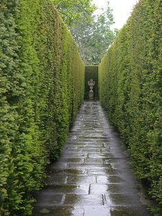 yew hedge // reminds me of the maze in HP the Goblet of Fire Garden Landscape Design, Landscape Architecture, Garden Landscaping, Luxury Landscaping, Garden Hedges, Garden Paths, Garden Privacy, Formal Gardens, Outdoor Gardens