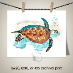 Sea Turtle Art Nature Animals Aqautic Ocean Painting Coastal Decor Nautical Art Photo Print gift for surfer gift for girlfriend by CoastalFocusArt    5.00 USD  A watercolor painting of a sea turtle swimming in the ocean. Please note: The print does NOT come with a watermark.  FREE US SHIPPING ON ALL PHOTO PRINTS  All other locations contact for custom shipping quote/custom listing >>> Prints ship flat and separate from other items but multiple prints ship together <<< SAMPLE FRAMING - shows…