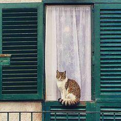 ♥ Cat in =^-^= the Window ♥