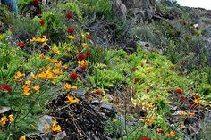 Desierto Florido - Chile I believe
