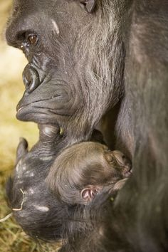 Checking In on the Cute New Arrival | Lincoln Park Zoo | Free and open to all, 365 days a year!