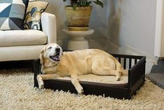 Dog Bed Attached To King Bed Pamper your pet. This Custom elevated dog bed comes with large drawer and stairs. Choose options your dog will love. With drawer, with doors, King bed frame with full/quee Snuggle Dog, Raised Dog Beds, Elevated Dog Bed, Puppy Pads, Bolster Dog Bed, Dog Cushions, Cool Dog Beds, Hacks, Animal Pillows
