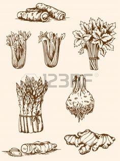 Set of vintage hand drawn vegetables