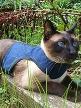 The unique lightweight Kitty Holster® cat harness is soft, comfortable and secure Cat Leash, Cat Harness, Mo Rocca, Different Types Of Cats, Jackson Galaxy, Cat Walk, Love Pet, Cool Cats, Cats And Kittens