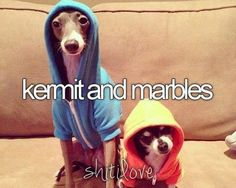 Seriously, watching the Jenna Marbles videos on YouTube makes my life better. These two puppies always make appearances! :)