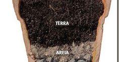 Regas em vaso depende da planta e do substrato.    Se o solo está compactado, a água demora a escoar e o substrato    se mantem úmido, depe...