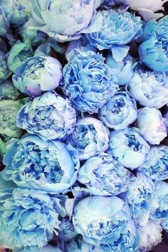 blue peonies