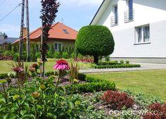 Moja codzienność - ogród Oli - strona 861 - Forum ogrodnicze - Ogrodowisko