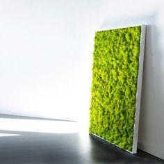 http://www.materiel-mur-vegetal.fr/397-774-thickbox/tableau-vegetal-stabilise-lichen-vert-citron-maxi-114x64cm.jpg