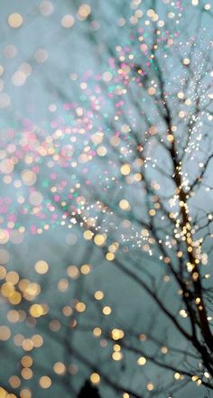 Twinkle Lights Photography for Inspiration Sparkle Wallpaper, Tree Wallpaper, Tumblr Bubbles, Phone Backgrounds, Wallpaper Backgrounds, Little Paris, Twinkle Lights, Favim, Cellphone Wallpaper