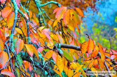 Autumn in the Blue Mountains - Absolutely love the fall pictures!
