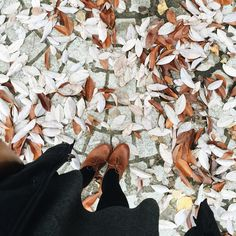 """""""Mi piace"""": 5,495, commenti: 32 - Tiffany / 👻 tifforelie (@tifforelie) su Instagram: """"Playing in the leaves counts as physical activity right?? 🙂🍁🍂 I tried out Fossil's new #fossilQ…"""""""