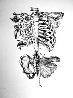 Drawing On Creativity Would be nice as a tatoo, no ? Illustration by Rebecca Ladds Drypoint Etching, Kunst Tattoos, Wow Art, Anatomy Art, Human Anatomy, Body Anatomy, Anatomy Drawing, Pierce The Veil, Tattoo Inspiration