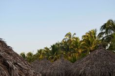 Palms and palapas | Shooting From The Hip