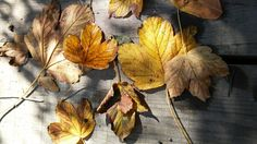 Herbst Painting, Art, Autumn, Art Background, Painting Art, Kunst, Paintings, Performing Arts, Painted Canvas