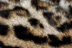 ocelot fur animal textures