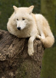.something about Wolves.... I think having a thing for these beautiful animals says alot about the person....