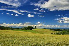 北海道 夏の美瑛の丘