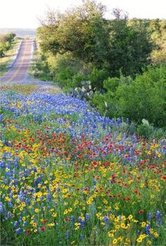 ~Texas wildflowers on a country road~