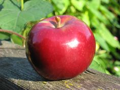 The Healthy Canadian Apple Varieties, Canadian Food, Farmer's Daughter, Beautiful Fruits, Red Apple, Cooking Classes, Farm Life, Health Fitness, Healthy Eating